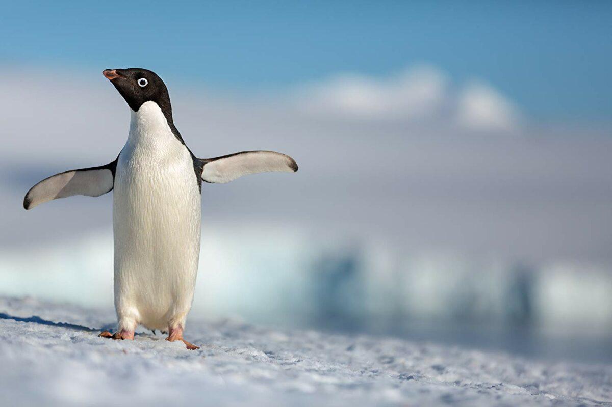 "Review: ""Penguins"""